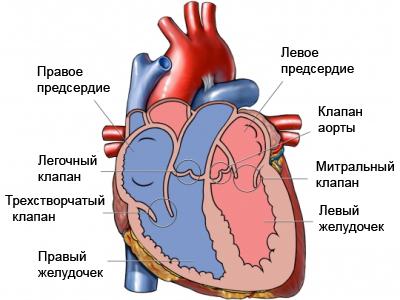 hypertension-thumb