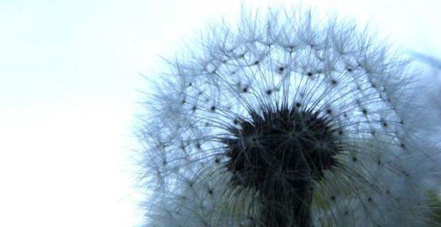 Аллергия и ее причины