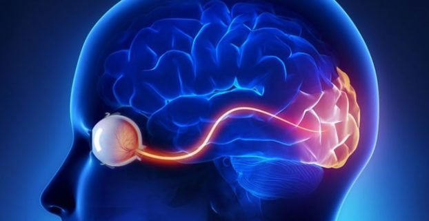 The optic nerve of a person