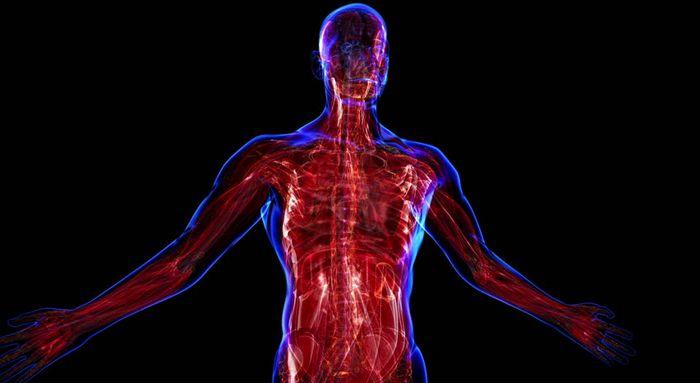 Myopathie - was ist diese Krankheit, Die Ursache des? Beschreibung, Symptome einer Myopathie und Prävention von Krankheiten
