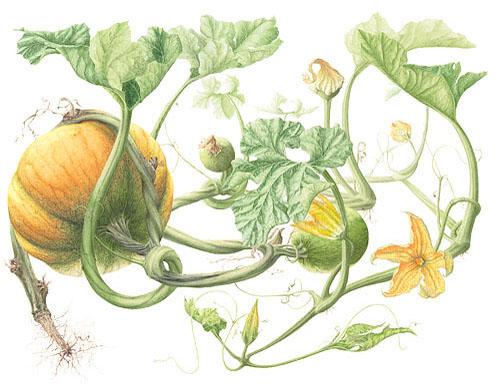 применение тыквенных семечек против глистов
