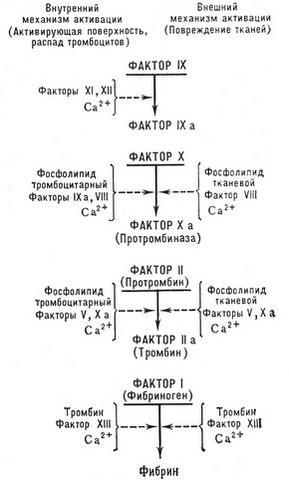 Коагуляционный гемостаз