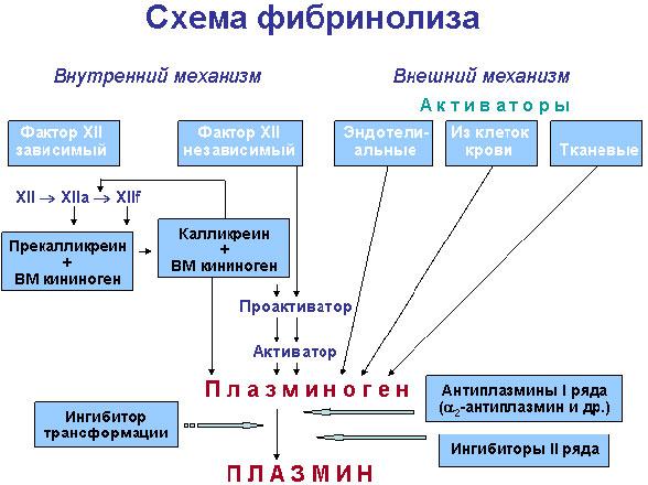 Фибринолиз — Система гемостаза