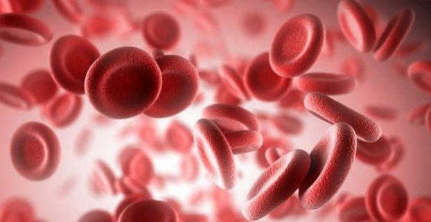 Эритройиты в крови человека