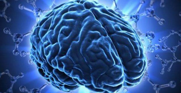 Hjerne - udseendet af hjernen