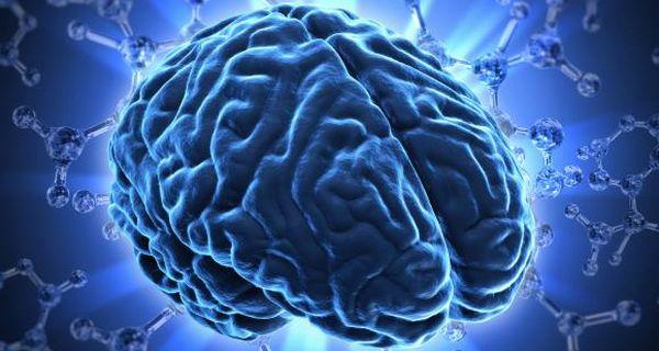 大脑 - 大脑的外观
